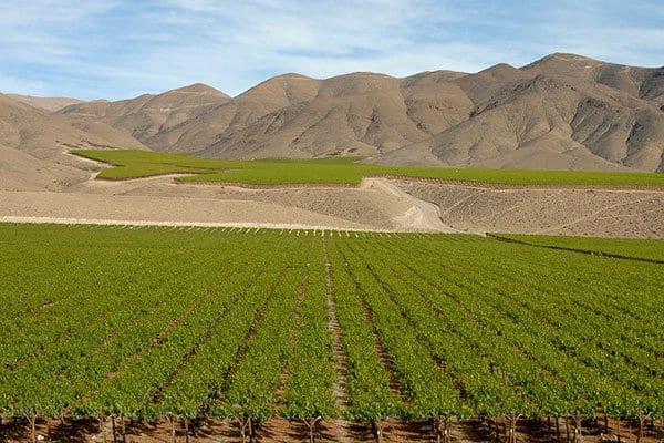 Wijnplantage Chili