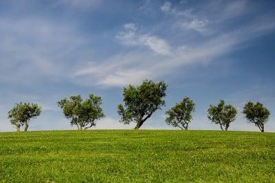 natuur bomen gras wolken