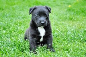 puppy in het gras