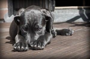 Woof hondenvoer
