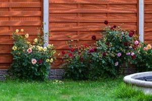 Schutting in de tuin
